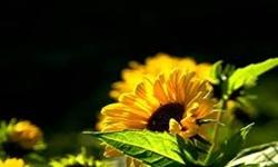 বছর শেষ, কিন্তু কি পেলাম - www.islamerpath.wordpress.com