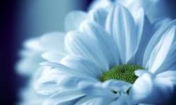 কিভাবে করবো বর্ষবরণ - www.islamerpath.wordpress.com