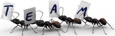 Ant stunning life 2 [www.islamerpath.wordpress.com]