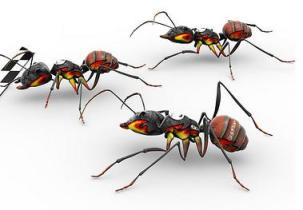 Ant stunning life 4 [www.islamerpath.wordpress.com]